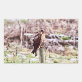 Northern Harrier Hawk on Fence Rectangular Sticker
