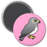 Northern Harrier male Magnets