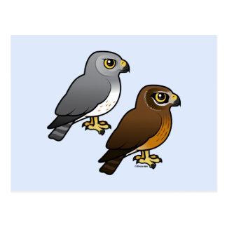 Northern Harrier pair Postcard