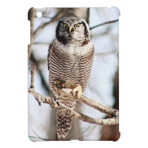 Northern Hawk Owl 3 Cover For The iPad Mini