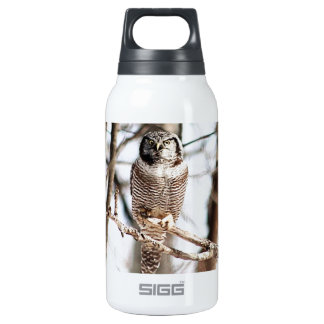 Northern Hawk Owl 3 Insulated Water Bottle