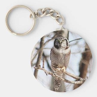 Northern Hawk Owl 3 Keychains