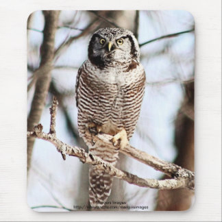 Northern Hawk Owl 3 Mouse Pad