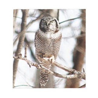 Northern Hawk Owl 3 Memo Notepads