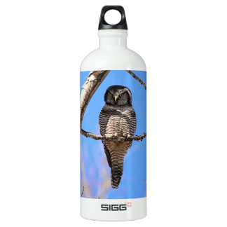 Northern Hawk Owl 4 Aluminum Water Bottle