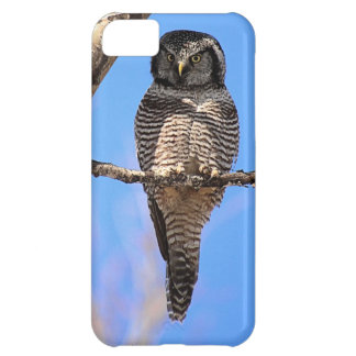 Northern Hawk Owl 4 Cover For iPhone 5C