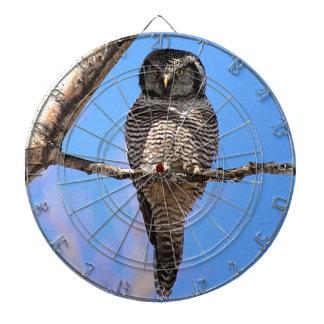 Northern Hawk Owl 4 Dartboard