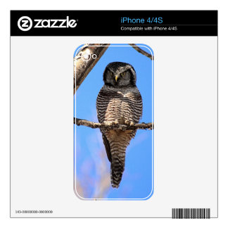 Northern Hawk Owl 4 Decal For iPhone 4