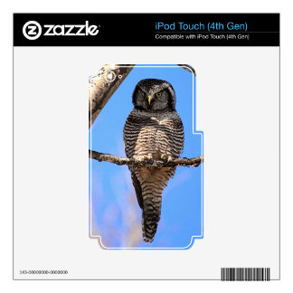 Northern Hawk Owl 4 Decals For iPod Touch 4G