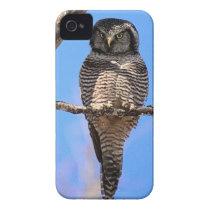 Northern Hawk Owl 4 iPhone 4 Case