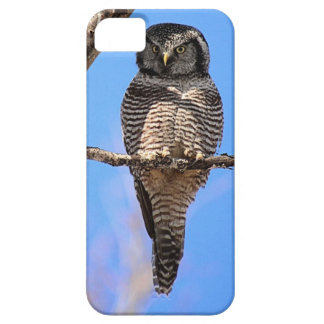 Northern Hawk Owl 4 iPhone SE/5/5s Case