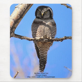 Northern Hawk Owl 4 Mouse Pad