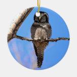 Northern Hawk Owl 4 Ornament