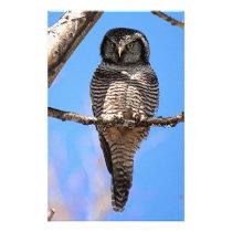 Northern Hawk Owl 4 Stationery