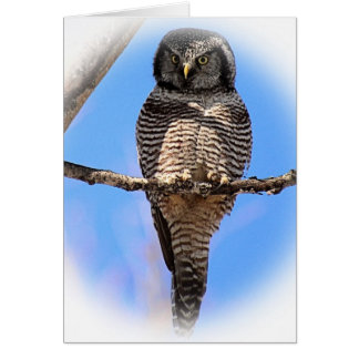Northern Hawk Owl 4A Card