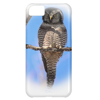Northern Hawk Owl 4A Cover For iPhone 5C