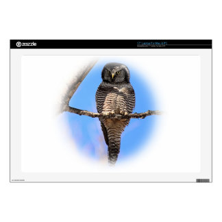 "Northern Hawk Owl 4A Decals For 17"" Laptops"