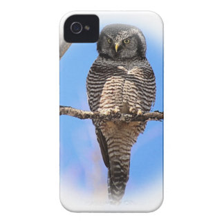 Northern Hawk Owl 4A iPhone 4 Cover