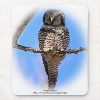 Northern Hawk Owl 4A Mouse Pad