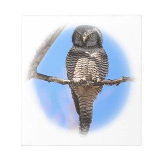 Northern Hawk Owl 4A Note Pad