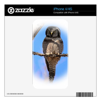 Northern Hawk Owl 4A Skin For The iPhone 4