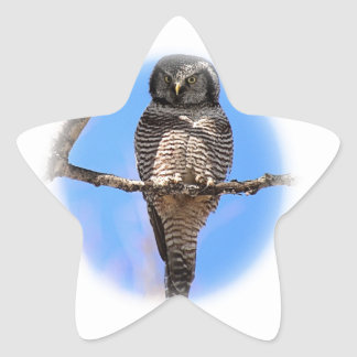 Northern Hawk Owl 4A Star Sticker