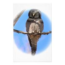 Northern Hawk Owl 4A Stationery