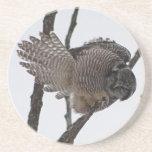 Northern Hawk Owl 6 Coaster