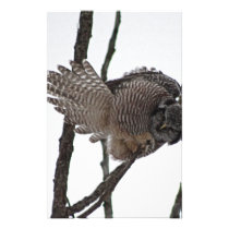 Northern Hawk Owl 6 Stationery