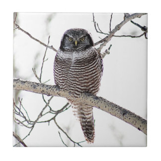 Northern Hawk Owl Ceramic Tile