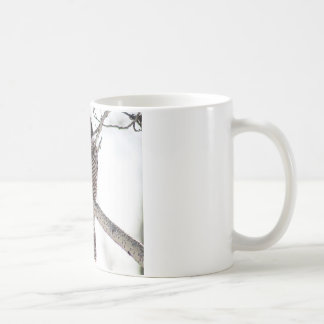 Northern Hawk Owl Coffee Mug