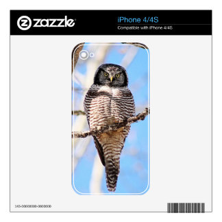 Northern Hawk Owl Decal For The iPhone 4S