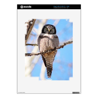 Northern Hawk Owl Decals For The iPad 2