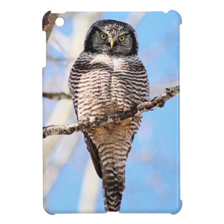 Northern Hawk Owl iPad Mini Cover