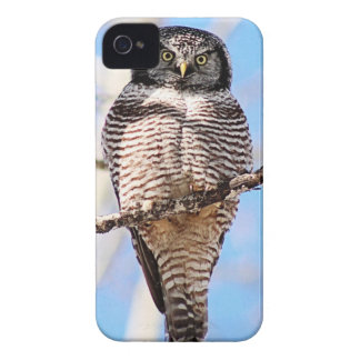 Northern Hawk Owl iPhone 4 Cover