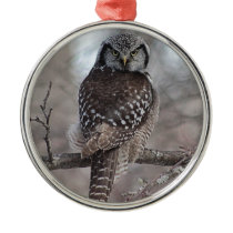 Northern Hawk Owl Metal Ornament