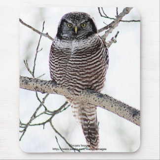 Northern Hawk Owl Mouse Pad