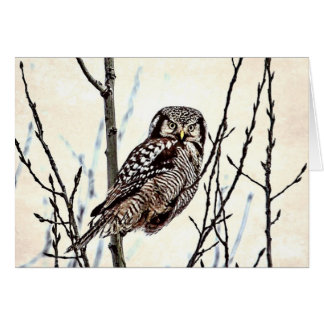 Northern Hawk Owl Notecard