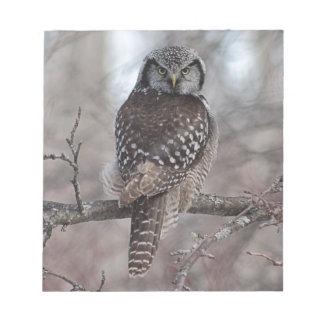 Northern Hawk Owl Notepads