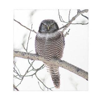 Northern Hawk Owl Scratch Pad
