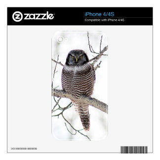Northern Hawk Owl Skin For iPhone 4