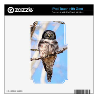 Northern Hawk Owl Skins For iPod Touch 4G