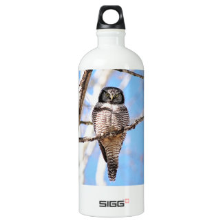Northern Hawk Owl Water Bottle