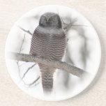 Northern Hawl Owl 7 Drink Coasters