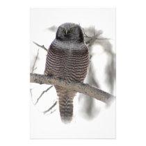 Northern Hawl Owl 7 Stationery