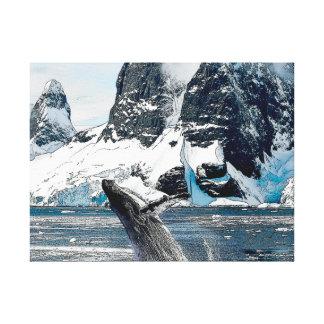 Northern Humpback Canvas Print