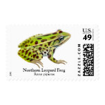 Northern Leopard Frog Postage
