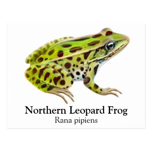 Northern Leopard Frog Postcard