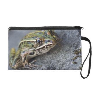 Northern Leopard frog, See-through Island, Wristlet Clutch