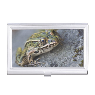 Northern Leopard frog, See-through Island, Business Card Holder